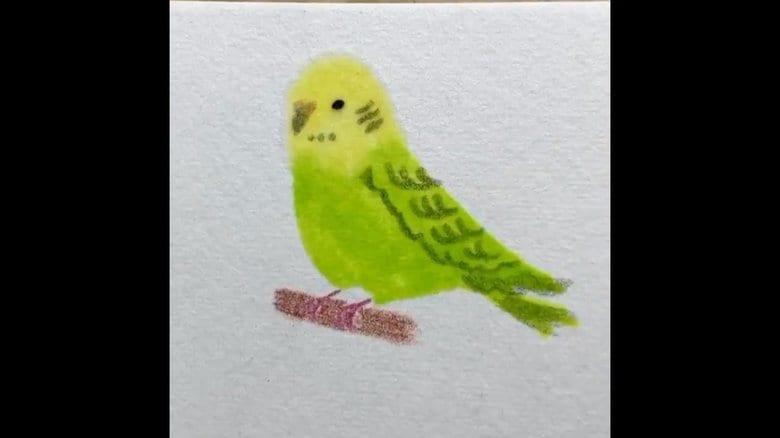輪郭を描かずに色を塗るだけでインコが完成…わずか25秒! 描き方のコツを聞いた