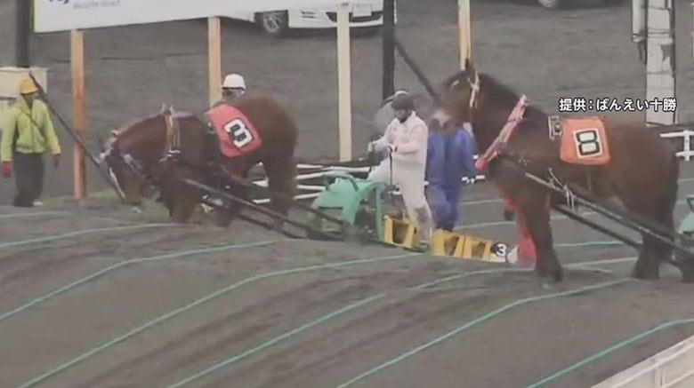 """「言うこと聞かずイライラ」騎手が馬の顔を蹴り批判殺到 デビューかけた能力検査で """"障害""""越えられず"""