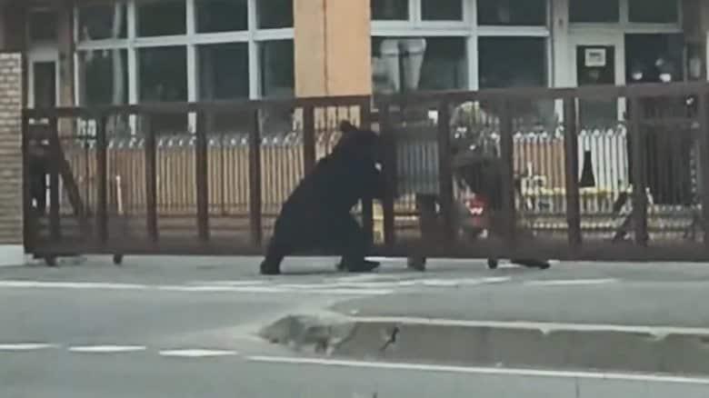市街地でクマに襲われる瞬間映像…4人重軽傷  通報から8時間 猟友会が発砲し駆除