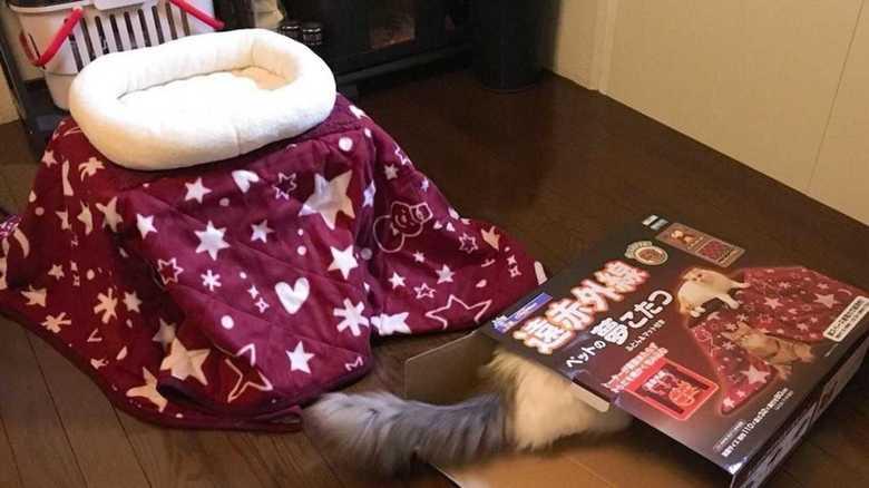 """""""猫用コタツ""""買ってきたら、そっちかい!「あるある」と話題だけどなぜ?専門家に聞いてみた"""