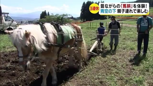 昔ながらの「馬耕」を体験 青空の下で親子連れが楽しむ 「土がゴリゴリ掘れた」