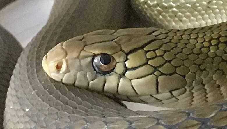 「これは爆睡してます」ヘビは目を開けたまま寝る!? 話題の投稿を専門家にも聞いてみた