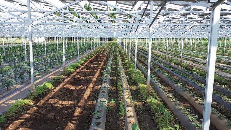 農業と発電をおトクにかなえるソーラーシェアリング 脱炭素への一手となるか
