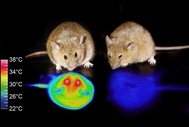 """""""人工冬眠""""のマウス実験に成功…人間も可能?栄養補給はどうする?研究者に聞いた"""