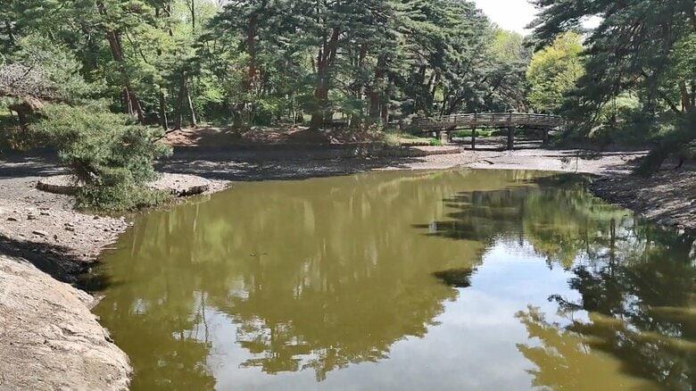 池の水ほとんど抜いてみたら…外来種の魚から生態系を守るプロジェクト