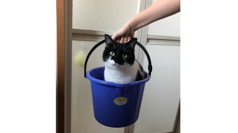 自らバケツに入ってお風呂場へ向かう猫がえらい! なぜ嫌がらないのか飼い主に聞いた