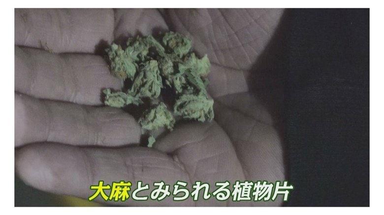 """若年層に広がる大麻 """"売人""""の男を直撃「薬物じゃない。植物です」【福岡発】"""