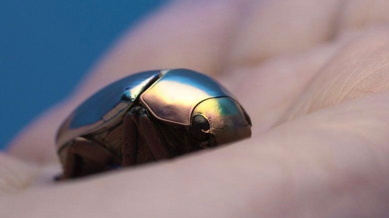 """光り輝く""""プラチナコガネ""""が美しい…鏡のように反射させる理由を専門家に聞いた"""