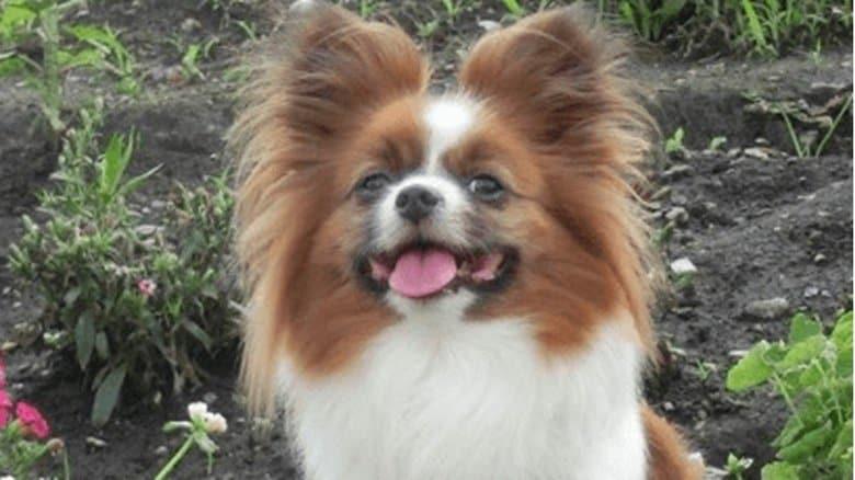「許せない」愛犬が散歩中に蹴飛ばされ即死…飼い主が語った当時の状況と立ち去った47歳の男