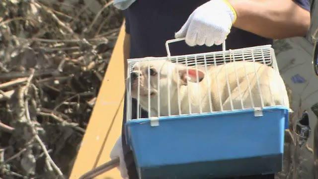 「劣悪な環境」で犬繁殖の業者 残り200匹も県外移送へ 保健所保護は21匹…譲受の希望は殺到