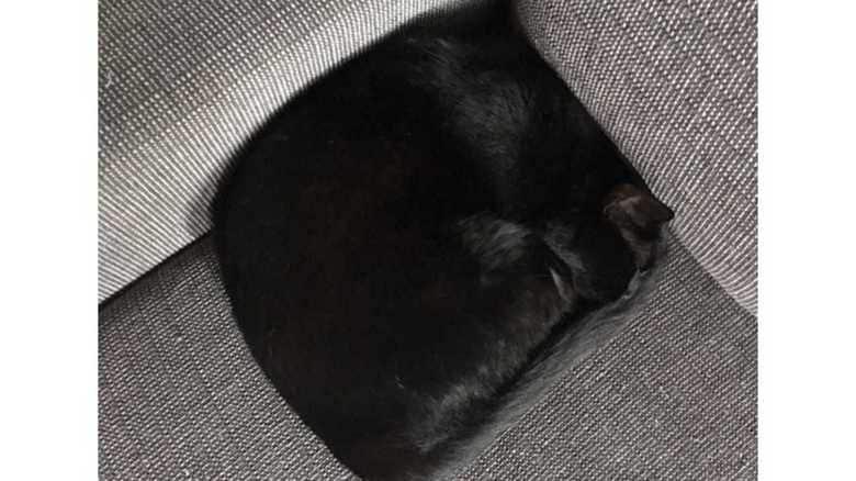 """猫はソファーで""""クッション""""になる!? まさかの四角い体勢に大反響…そのナゾを解いてみた"""