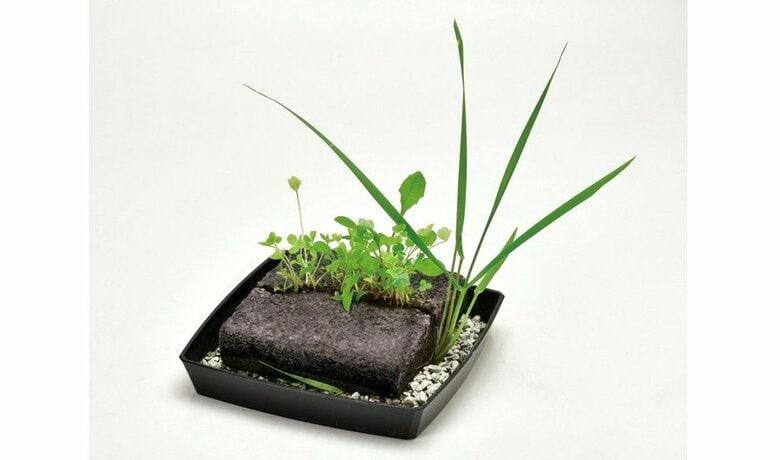 """手塩にかけて""""雑草""""を育てる時代!? 「雑草栽培セット」が1カ月半で3000個を販売…魅力を聞いた"""
