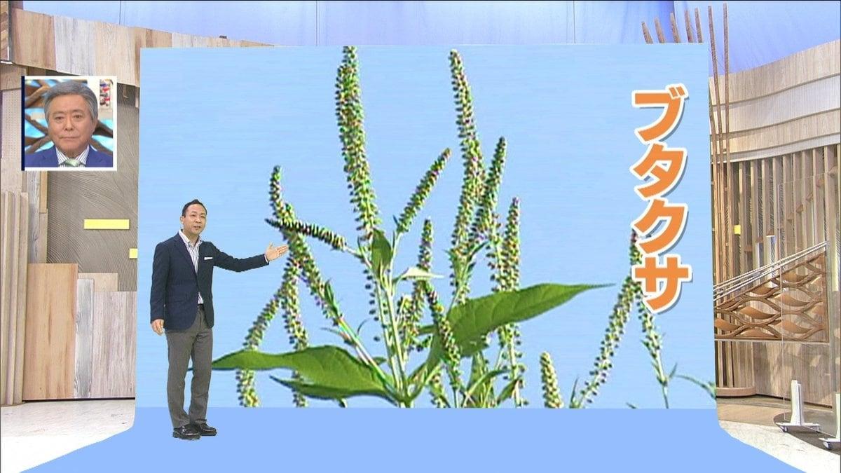 2021 花粉 いつまで