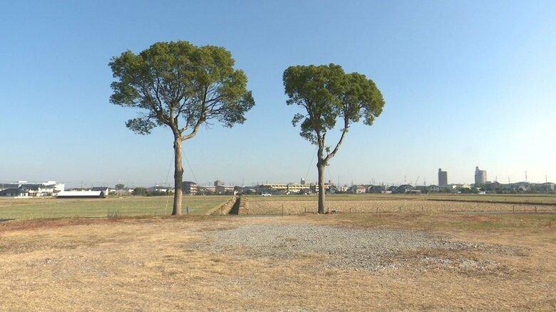 田園風景にポツンと…仲良く寄り添って立つ「夫婦の木」の歴史 約20年前の出来事きっかけに現在の場所へ