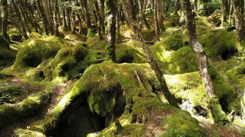 Beat the Heat with a Trip to Nagano's Moss Forest (Video)