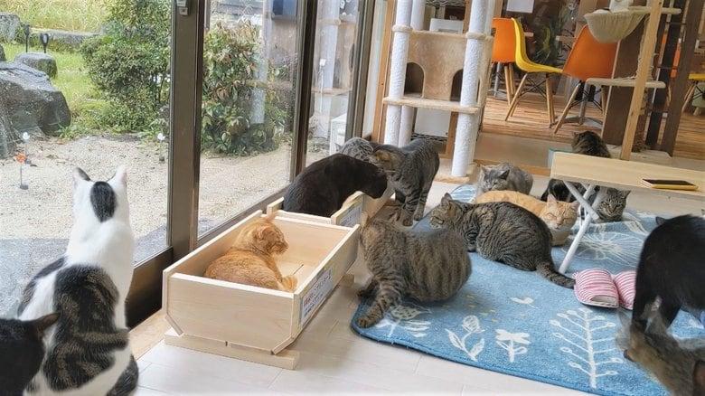 ヒノキの香りに夢心地…花用プランターが『ネコ用ベッド』として大ヒット ネコカフェでも順番待ちネコ多数