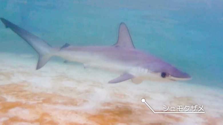 思い出のプールに泳ぐサメ。廃校を水族館にした過疎の町の逆転劇