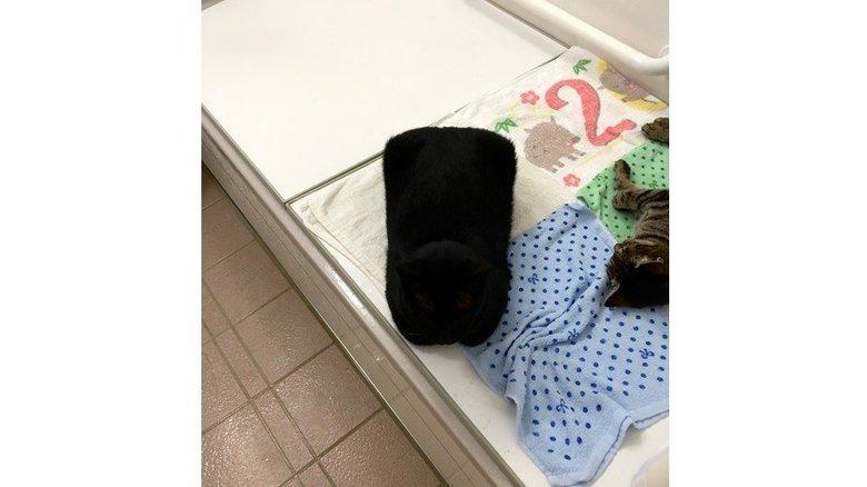 """本当に猫なの?風呂場の""""四角い枕""""に大反響…どんな体勢だったのか飼い主に聞いた"""