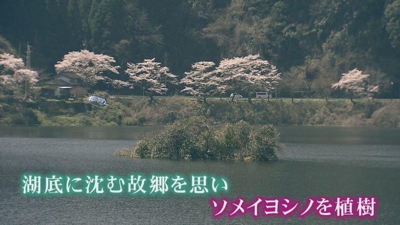 美しかったふるさとを忘れないように…ダム湖に沈んだ集落の住民らが桜を植樹