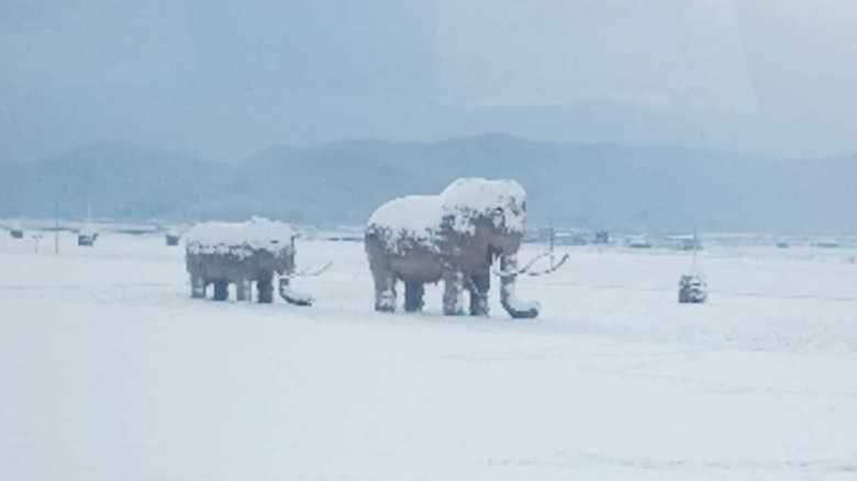 田んぼに突如出現!積雪の中たたずむ「マンモス」の正体