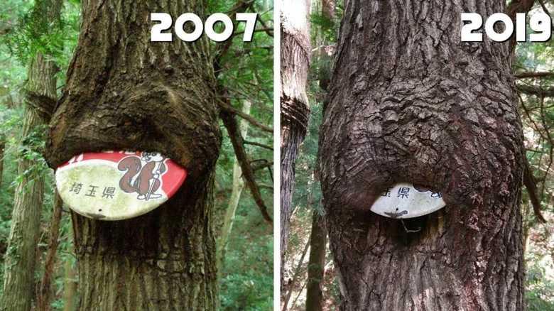 """木が""""看板""""を飲み込んでいく…12年前との比較写真が話題に 専門家に理由を聞いた"""