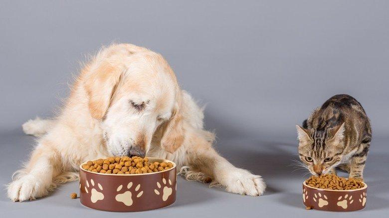 あの猫に贈りたい!?「ペット用お歳暮」が登場…今年もお世話になりました。