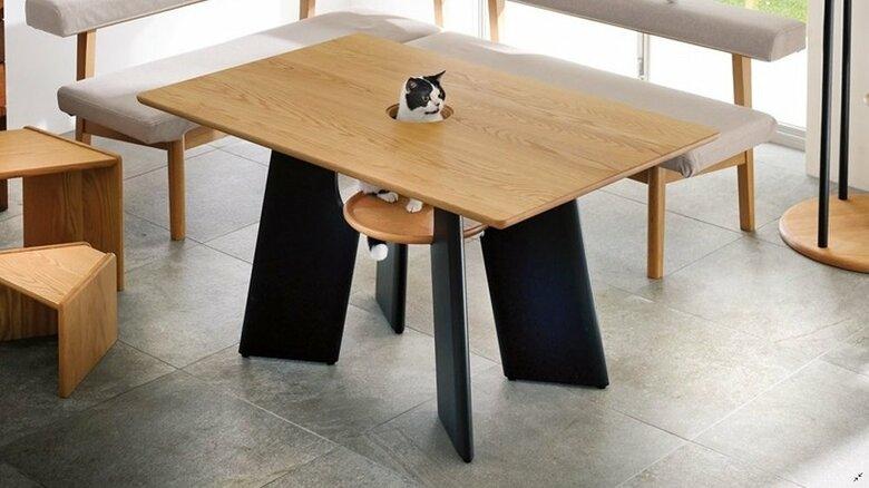 """猫がひょっこり顔を出す? 中央に穴がある""""テーブル""""が話題…おすすめの楽しみ方を担当者に聞いた"""