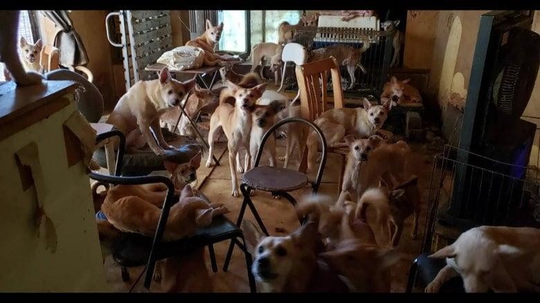 「ひどいな」8畳2間に犬163匹がすし詰め…最大級「多頭飼育」崩壊の現場 子犬の譲渡始まる