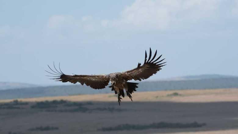鳥と一緒に空を飛ぶ…! 長年の夢が叶いました