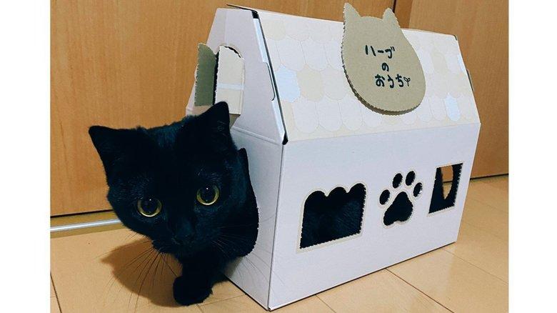 箱と一体化…まん丸おめめの黒猫が可愛い! すんなり入ったのか飼い主に聞いてみた