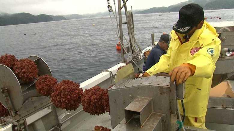 差別の原因は過去のトラウマ!?韓国が日本の水産物を嫌がるワケ