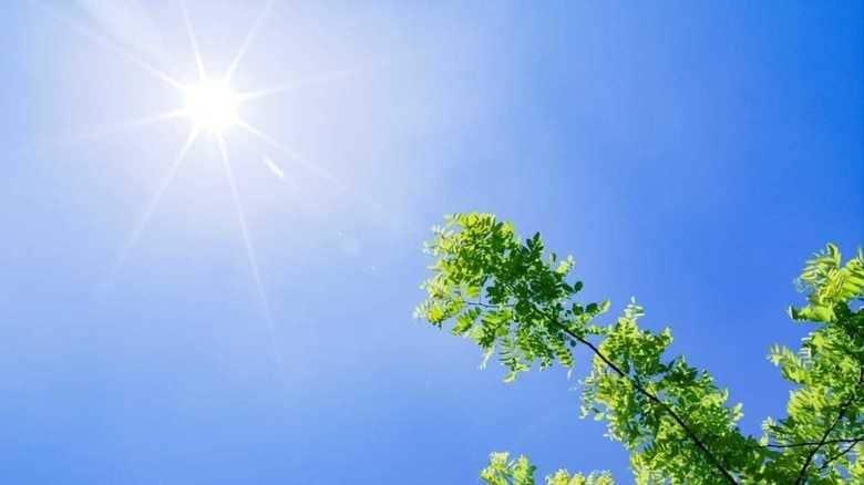 九州電力「エアコン使って下さい」 熱中症予防で高齢者の電気代割引き