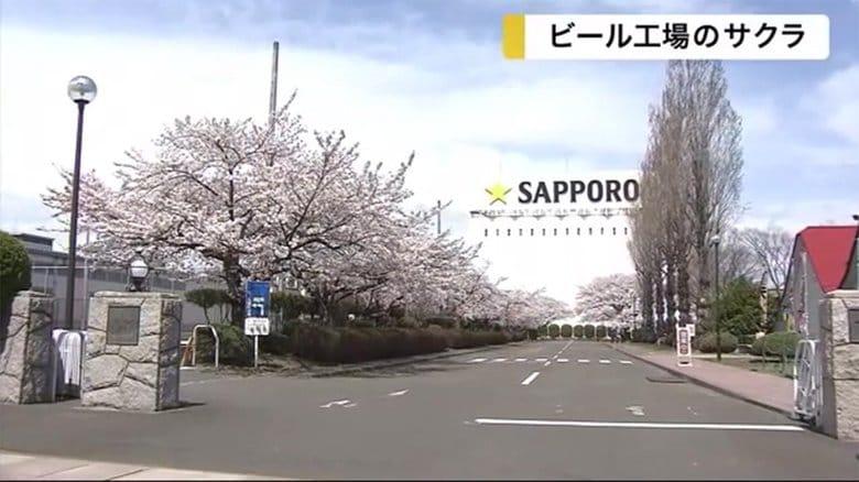 ビール工場で咲き誇る桜 ビオトープ園に春の訪れ告げる【宮城発】