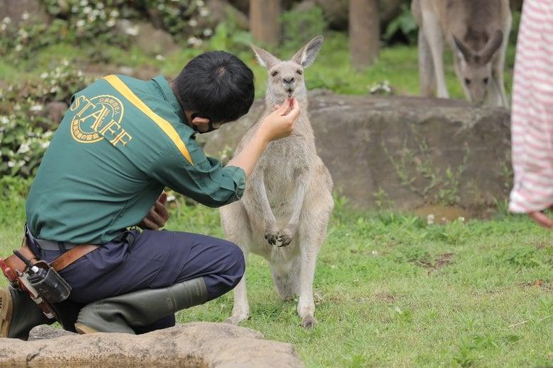 """""""お口チェック""""されるがままのカンガルーがかわいい…暴れることはない? 動物園に聞いた"""