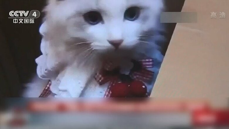 中国で流行「ブラインドボックス」商法に批判殺到…子犬・子猫を生きたまま箱詰めし宅配