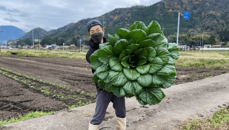 """重さ6.2キロ! """"巨大な小松菜""""が収穫され話題…なぜそんなに大きいの? 生産者に聞いた"""