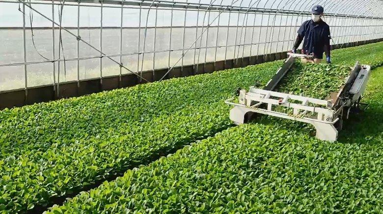 科学の力で10回が限界とされていた収穫を14回に…元建築士の社長が挑む「サイエンス農業」