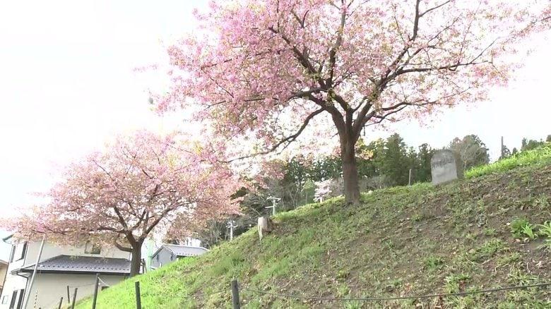 「桜ライン」津波到達地点に桜を植樹 教訓を後世に…約170kmに1万7000本の計画【岩手発】
