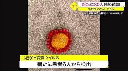 仙台 市 コロナ ウイルス 速報