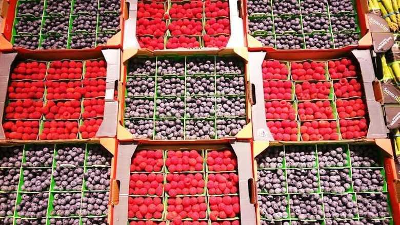 【開場まで1カ月】パリ・ランジス市場から学ぶ豊洲の課題