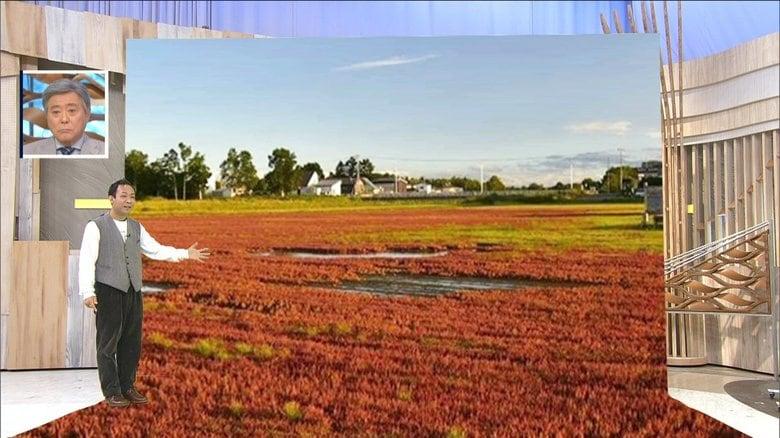 湖に赤いじゅうたん?「アッケシソウ」が見頃…秋めいてくるもゲリラ豪雨には注意を