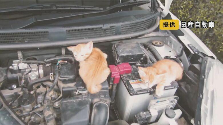 夏も「日陰で涼しい」と要注意…人と猫、互いを守る「猫バンバン」 取材したJAFはひと月で22件出動も