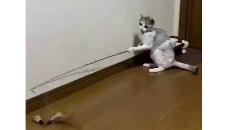"""遊ぶのに飼い主の手は借りない! """"釣り名人""""な猫が器用すぎる"""
