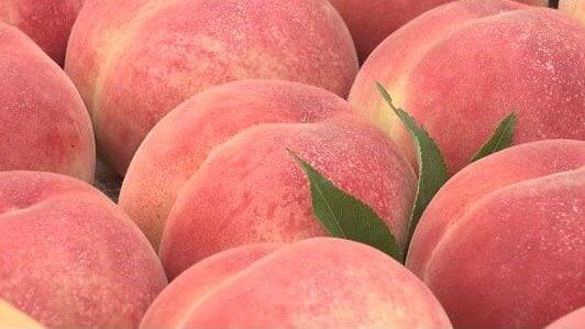 「福島の桃、食べ過ぎて太ったよ!」米ソフトボール監督が福島県でのおもてなしに「アイラブ・フクシマ!」と感謝