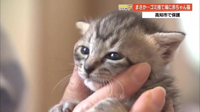 「本当に残酷」赤ちゃん猫4匹をポリ袋に入れてゴミ捨て場に…コロナ禍で増えるペット遺棄【高知発】