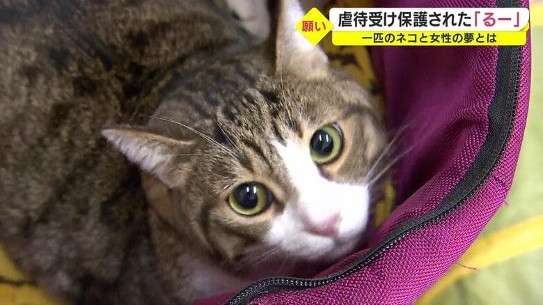 虐待受け保護された猫「るー」甘えん坊な性格を生かし人を癒やすセラピーキャットに 保護猫と支援者をつなぐ女性の活動【鹿児島発】