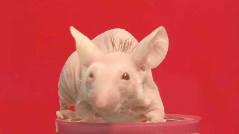 「脱毛症」に画期的治療法!? 理研が「毛包」の大量培養に成功