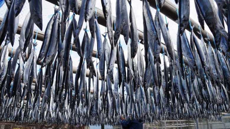 """中国・台湾のサンマ漁獲量は日本の2倍! """"豊漁""""を喜べない理由"""