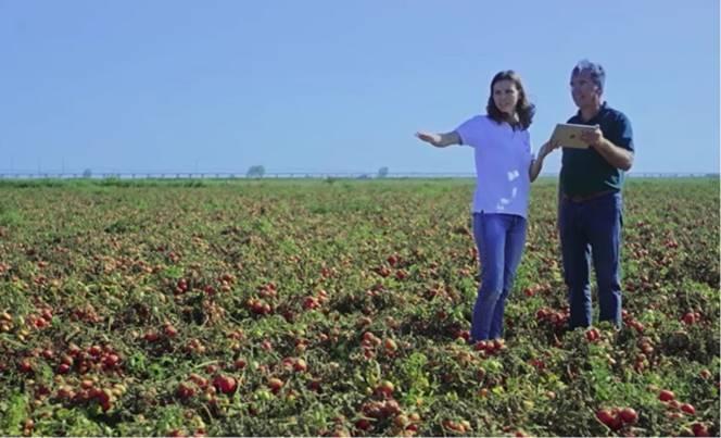 熟練農家並みのトマト栽培が誰でも可能に!? NECがAIで農業支援…他の野菜もOK?仕組みを聞いた