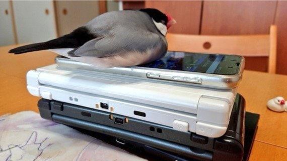 """宿題しないので取り上げたゲーム機を""""見張る""""文鳥に「くそぅ」…悶絶する息子が微笑ましい"""